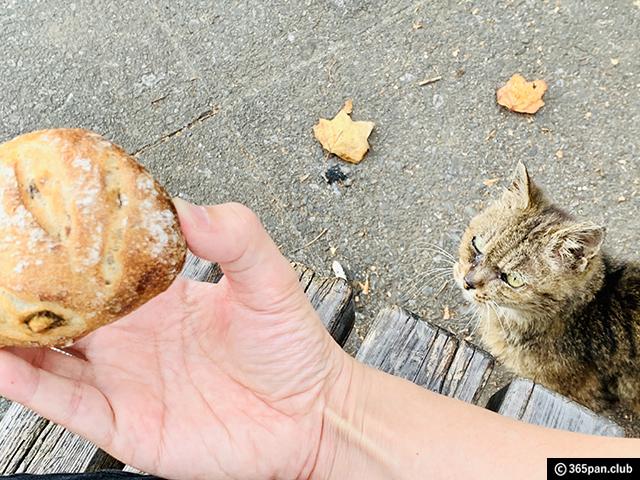 【高田馬場】テレビで紹介したお取り寄せパンとおすすめハード系パン-11